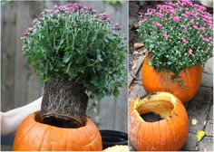 How To: Fall Pumpkin Planters