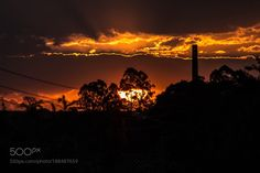 Sunset by JerryAgessaniSouza #animals #animal #pet #pets #animales #animallovers #photooftheday #amazing #picoftheday