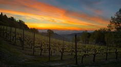 Fiery Dawn - Vineyard at the footsteps of Montepulciano, Tuscany, Italy
