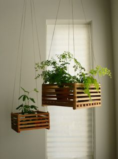 Monkey and Squirrel: kitty safe plants