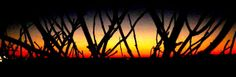 Sunset through some Whitstable twigs.