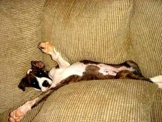 """""""I think I'll just nap here. You didn't want this chair, did ya?"""""""