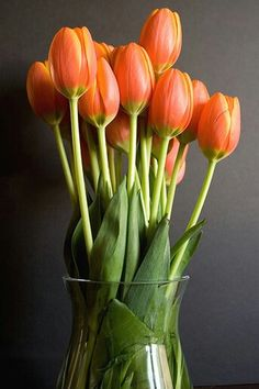 dark orange tulips in vase with a modern style. Tulips Flowers, Orange Flowers, My Flower, Fresh Flowers, Spring Flowers, Beautiful Flowers, Red Tulips, Beautiful Bouquets, Colorful Roses