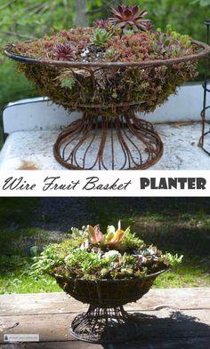 Wire Fruit Basket Planter - humdrum made fabulous... Rustic Recycled Garden DIY | Gardening