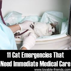 Please Share This Page: Photo – © mico_images – Fotolia.com We discovered a fantastic tutorial about how to recognize feline emergencies and had to share! The link is at the end of our commentary as per usual. Now matter how careful and attentive we are, emergencies can find their way slipping behind our backs and …