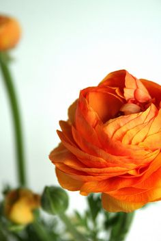 """""""Today I'm willing to be more present, more luminously central to my own story."""" -Joybroker http://www.facebook.com/pages/Joybroker/174844032557733 