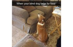 33 Hilarious Snapchats That Prove We Really Don't Deserve Dogs (Slide #4) - Pawsome