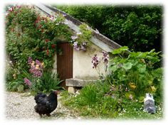 Marguerite et Cie, site d'information sur le lapin de compagnie