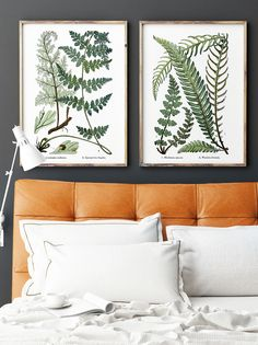 """Botanical fern prints diptych wall art set of two. These vintage 19th-century British botanical illustrations have been refreshed and resized for modern frames - Printable Wall Art - Pinterest community enjoys 20% off with discount coupon code: PIN20 - Please repin, favorite, or click """"Visit"""" to see more affordable wall art!"""