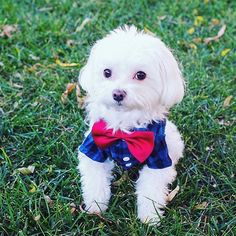 Hi! Just checking: are you wearing your best April outfit? #someoneis (Photo: @restorationredoux, #RSpets)
