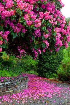 Beautiful flowers scream spring - GIANT CRAPE MYRTLE