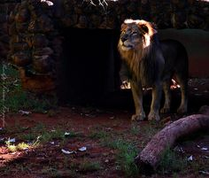 ..visitas ....dia mundial dos animais.. ;)