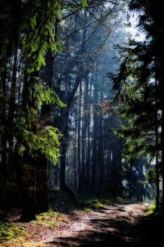 tulipnight:  Waldweg byDaniela
