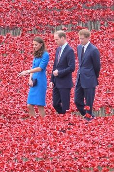 8/5/14. Kate, Prince William And Prince Harry Visit The Spectacular Sea Of Poppies