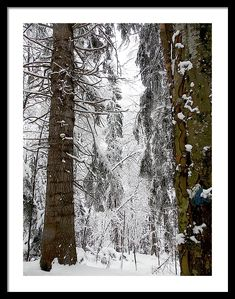 Winter Framed Print featuring the photograph Winter Photo In The Forest by Cuiava Laurentiu Magical Paintings, Poster Prints, Framed Prints, Gifts For My Sister, Winter Photos, Frame Shop, Hanging Wire, Wood Print, Clear Acrylic