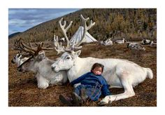 Absolutely Stunning. Hamid Sardar-Afkhami: 'The Duhalar Depend on...Domestic Reindeer Population' | AnnenbergSpaceForPhotography.org