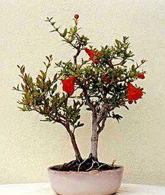 Feng Shui, Bonsai, Dream Catcher, Herbs, Landscape, Plants, Color, Gardening, Decoration