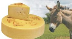 Most Expensive Cheese, Made With Donkey Milk via @Incredible Things
