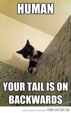 "Aaahahaha. Ok i admit i didnt get it at first cuz as a girl i have no such thing as a ""tail"" lol then.... oooooooh  :)"