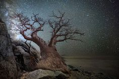 """Ancient trees affected by cosmic rays are the subject of The """"Diamond Nights"""" project by San Francisco-based photographer Beth Moon"""