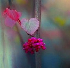 flores en forma de corazón representando la belleza de existir