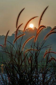 Nature - title Summer Sunset