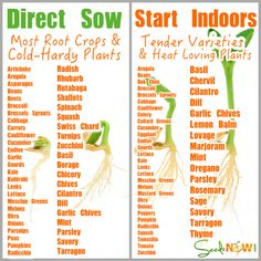 do I Know Which Seeds to Direct Sow and Which to Seeds to Start Indoors? How do I Know Which Seeds to Direct Sow and Which to Seeds to Start Indoors? How do I Know Which Seeds to Direct Sow and Which to Seeds to Start Indoors? Gardening For Beginners, Gardening Tips, Kitchen Gardening, Gardening Gloves, Flower Gardening, Gardening Supplies, Flowers Garden, Gardening Direct, Vegetable Garden For Beginners
