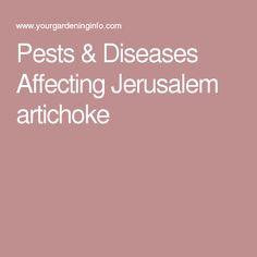 Pests & Diseases Affecting Jerusalem artichoke