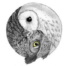 owl yin and yang. kind of neat