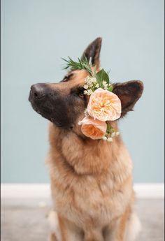 German Shepard wearing a floral crown