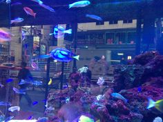 An aquarium outside a big store in Roppongi.