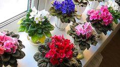 Tento návod jak pěstovat fialky zaručí, že se vždy dočkáte nádherných květů, které mohou zdobit váš interiér i exteriér. Těchto 5 zásad vás navíc přesvědčí o tom, že péče o tyto květiny není až tak složitá - Pesto, Floral Wreath, Wreaths, Plants, Decor, Gardening, Floral Crown, Decoration, Door Wreaths
