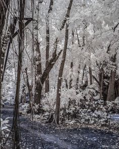 Hey Dumaguete! A walk at the local zoo as seen in infrared. #travel #islandlife #ir #infrared #nature