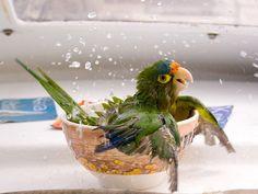 Looks like someone enjoys baths parrot bird pet