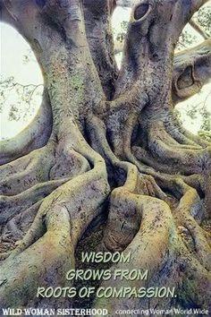 tree roots of wisdom