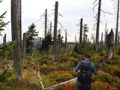 Höchster Punkt am Fleckestein Bradley Mountain, Full Stop, Hiking, Stones