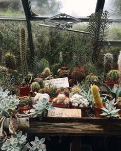 cacti in greenhouse. / sfgirlbybay