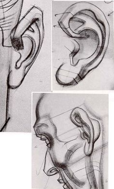 ears Art by Burne Hogarth Drawing Heads, Human Drawing, Body Drawing, Life Drawing, Anatomy Sketches, Anatomy Drawing, Anatomy Art, Ear Anatomy, Human Anatomy