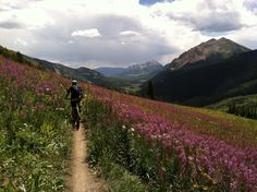 """""""Crested Butte Wildflowers"""" repin from @wildflowerfest"""