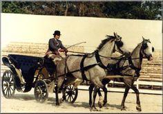 Résultats Google Recherche d'images correspondant à http://www.cheval-pension.fr/wp-content/uploads/2012/01/attelage21.jpg