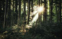 https://flic.kr/p/M555mM | magic in the woods