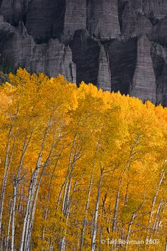 """Contrast""- Uncompahgre Wilderness, Colorado | Tad Bowman on flickr"