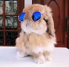 cute animals Mini-Pet Sunglasses for Rabbits! With these adorable Mini-Pet Sunglasses from Bunny Supply Co, you can dress your furry little friend up like the movie star they are! Baby Animals Super Cute, Cute Baby Bunnies, Funny Bunnies, Cute Little Animals, Cute Funny Animals, Cute Dogs, Little Pets, Baby Animals Pictures, Cute Animal Pictures