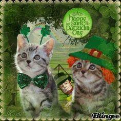 St. Pats Kittens