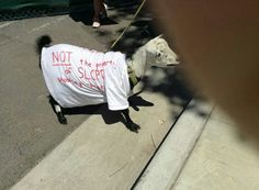 Justice for Geist GOAT fan at Rally #1.  Please visit us at http://www.facebook.com/JusticeForGeist, Instagram @JusticeForGeistUtah and on Twitter @JusticeforGeist.Tag everything #justiceforgeist