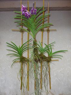 I know these are orchids but I can see this done in air plants. Orchids Garden, Orchid Plants, Air Plants, Garden Plants, Indoor Plants, House Plants, Hanging Orchid, Hanging Plants, Exotic Flowers