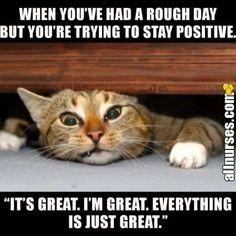 Memes Humor, Funny Animal Memes, Funny Animal Pictures, Funny Animals, Funny Memes, Humor Humour, Ecards Humor, Animal Humor, Work Memes