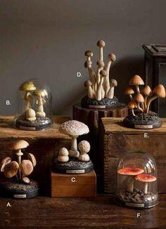 Sciencific Model of Mushrooms