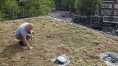 'Groene daken verbeteren concentratie' | NU - Het laatste nieuws het eerst op NU.nl
