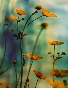 colour,beautiful,flowers,nature,photography,color-a2b48c8fba5548729bbe1ee35e551971_h[2].jpg (374×480)